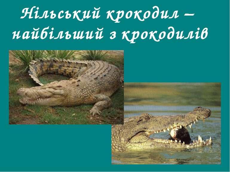 Нільський крокодил – найбільший з крокодилів Гришельова Т.І.,учитель географі...