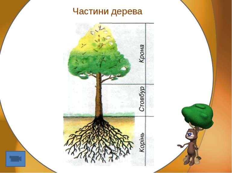 Частини дерева