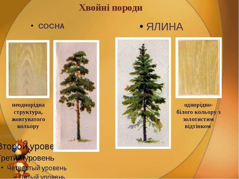 Хвойні породи СОСНА ЯЛИНА неоднорідна структура, жовтуватого кольору однорідн...