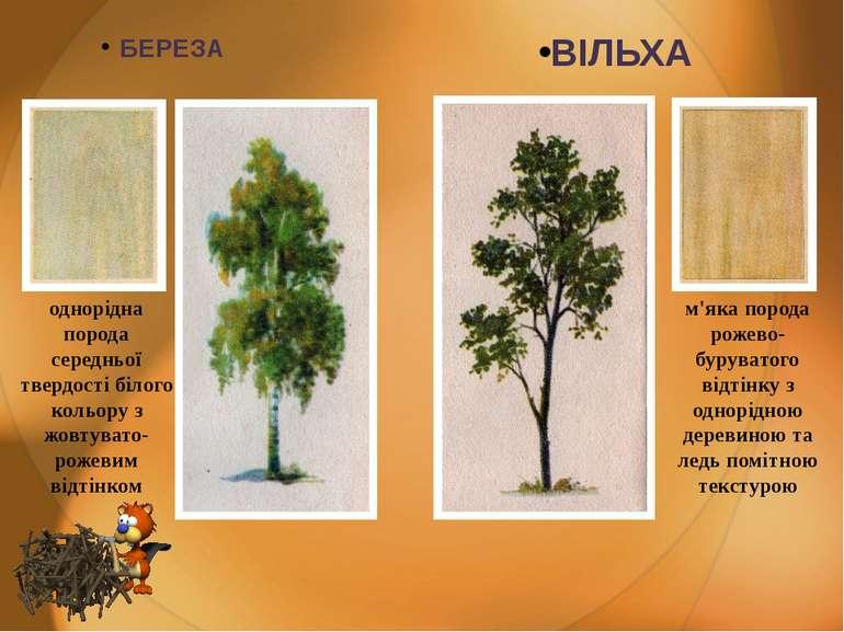 БЕРЕЗА ВІЛЬХА однорідна порода середньої твердості білого кольору з жовтувато...