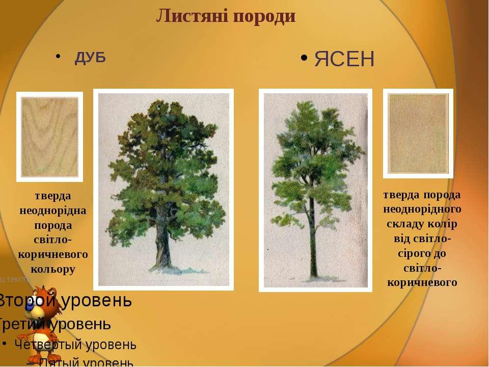 Листяні породи ДУБ ЯСЕН тверда неоднорідна порода світло-коричневого кольору ...