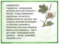 БАВОВНИК - Однорічна чагарникова рослина висотою близько 1 метра. Плоди бавов...