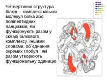 Четвертинна структура білків— комплекс кількох молекул білка або поліпептидни...
