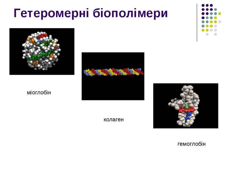 Гетеромерні біополімери міоглобін колаген гемоглобін