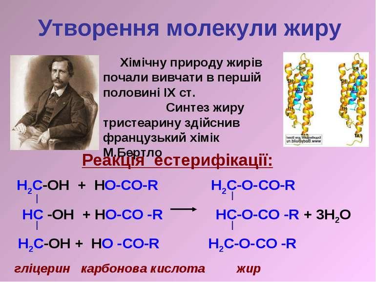 Утворення молекули жиру H2C-OH + HO-CO-R H2C-O-CO-R HC -OH + HO-CO -R HC-O-CO...