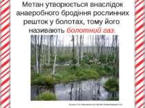 Метан утворюється внаслідок анаеробного бродіння рослинних решток у болотах, ...