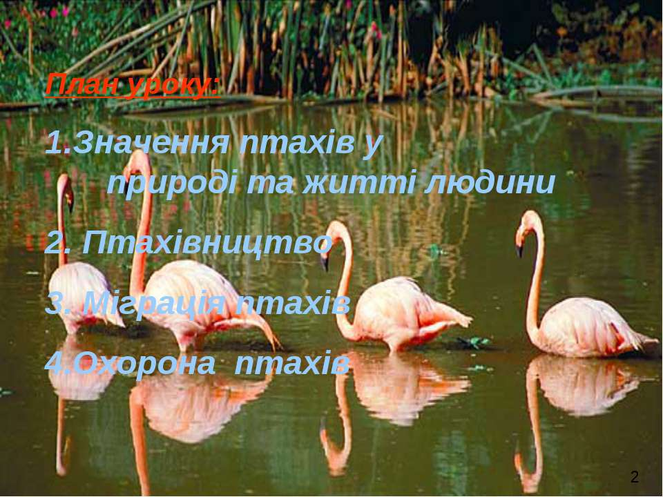 План уроку: Значення птахів у природі та житті людини Птахівництво Міграція п...