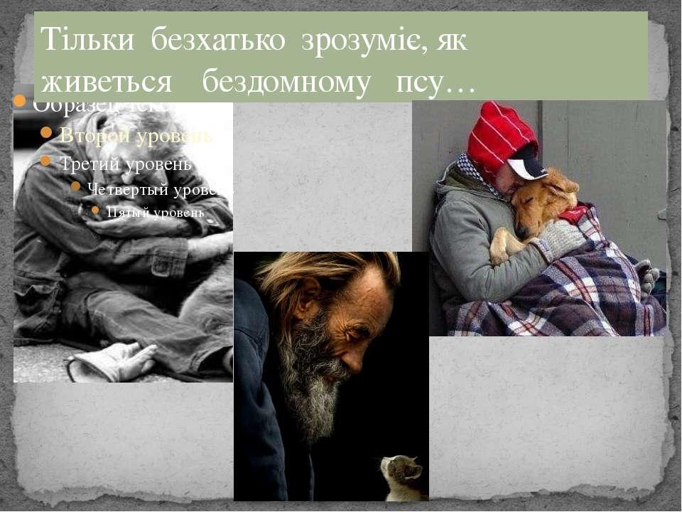 Тільки безхатько зрозуміє, як живеться бездомному псу…