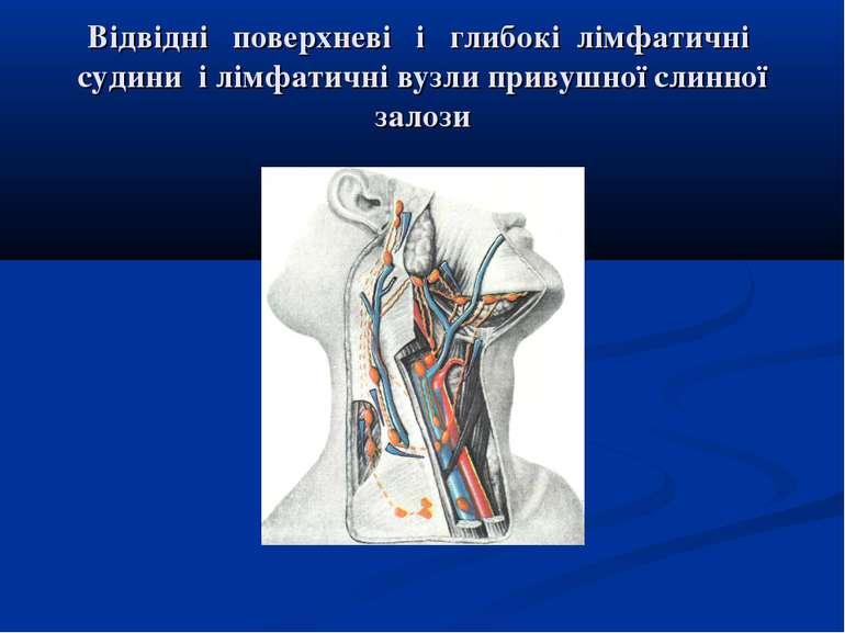 Відвідні поверхневі і глибокі лімфатичні судини і лімфатичні вузли привушної ...