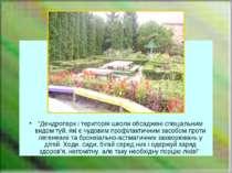 """""""Дендропарк і територія школи обсаджені спеціальним видом туй, які є чудовим ..."""