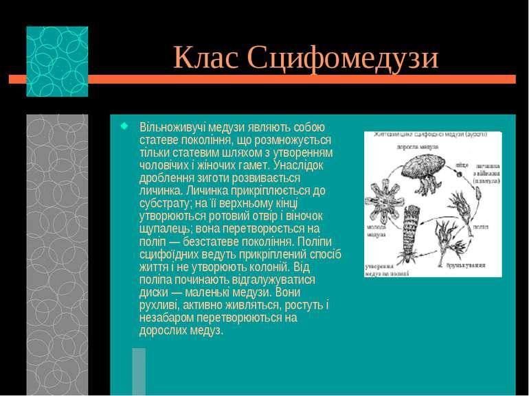 Клас Сцифомедузи Вільноживучі медузи являють собою статеве покоління, що розм...