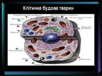 Клітинна будова тварин