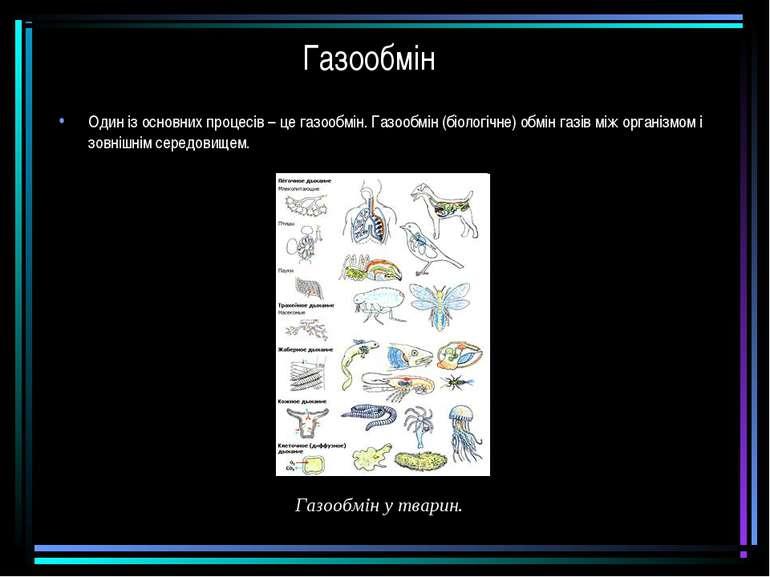 Газообмін Один із основних процесів – це газообмін. Газообмін (біологічне) об...