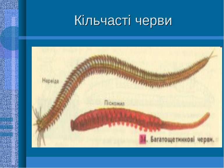 Кільчасті черви