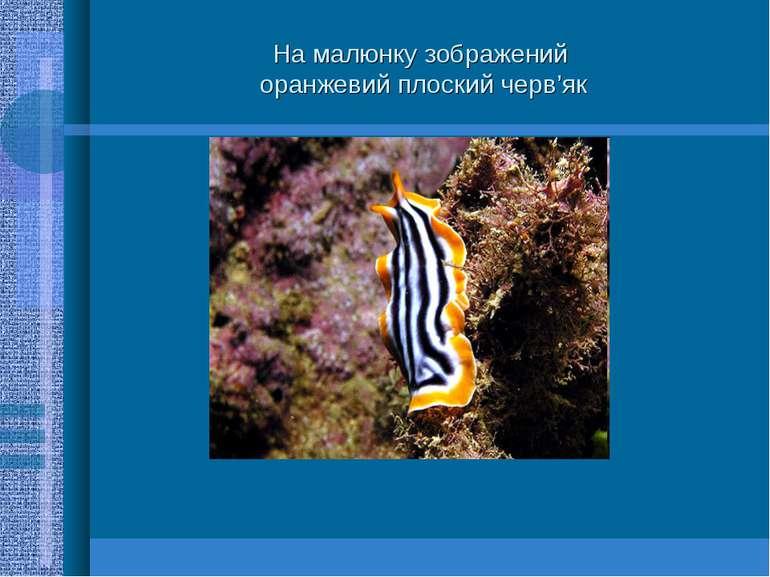 На малюнку зображений оранжевий плоский черв'як