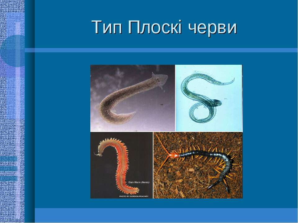 Тип Плоскі черви