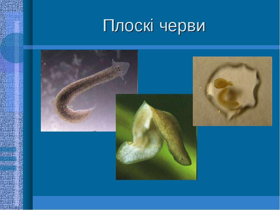 Плоскі черви