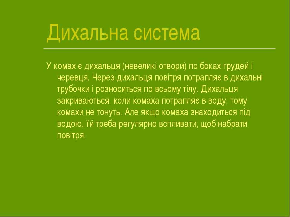 Дихальна система У комах є дихальця (невеликі отвори) по боках грудей і черев...