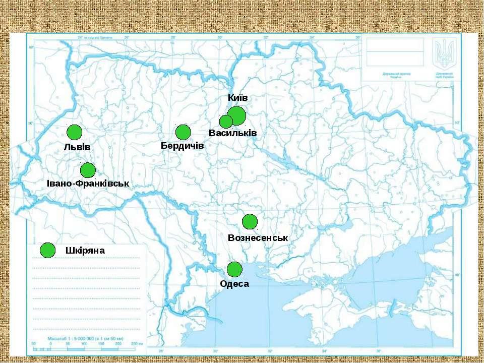 Львів Київ Одеса Вознесенськ Бердичів Івано-Франківськ Васильків Шкіряна