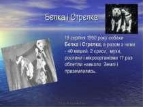 Бєлка і Стрєлка 19 серпня 1960 року собаки Бєлка і Стрєлка, а разом з ними - ...