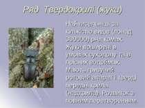Ряд Твердокрилі (жуки) Найчисельніші за кількістю видів (понад 300000) ряд ко...
