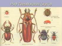 Ряд Твердокрилі (жуки)
