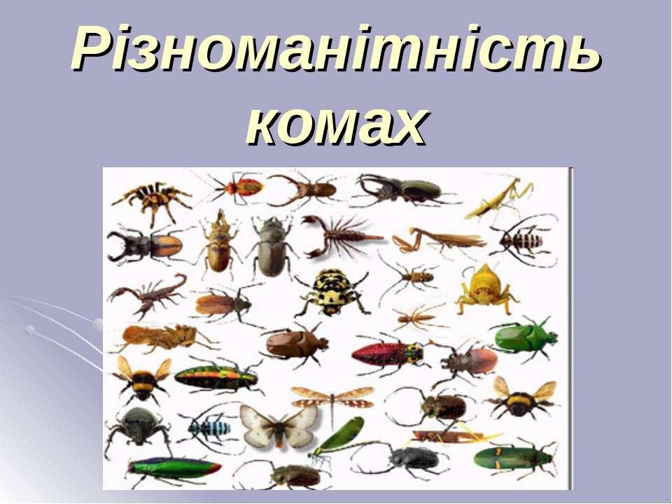 Різноманітність комах