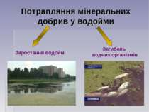 Потрапляння мінеральних добрив у водойми Заростання водойм Загибель водних ор...