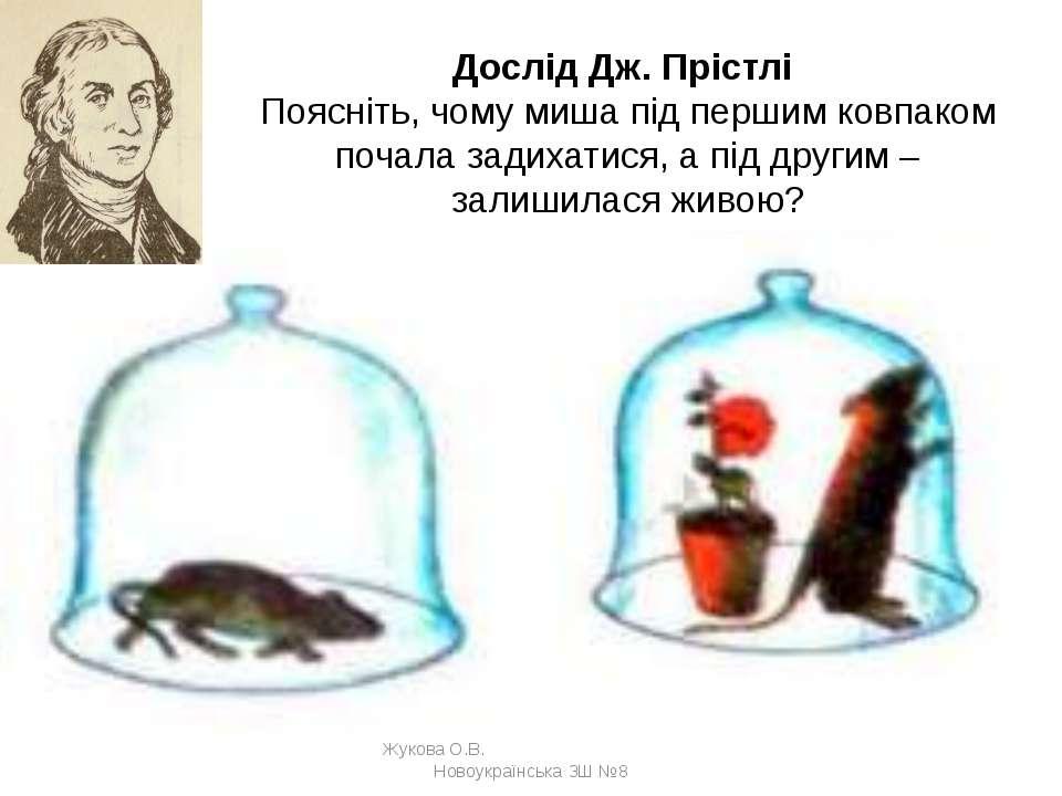 Дослід Дж. Прістлі Поясніть, чому миша під першим ковпаком почала задихатися,...