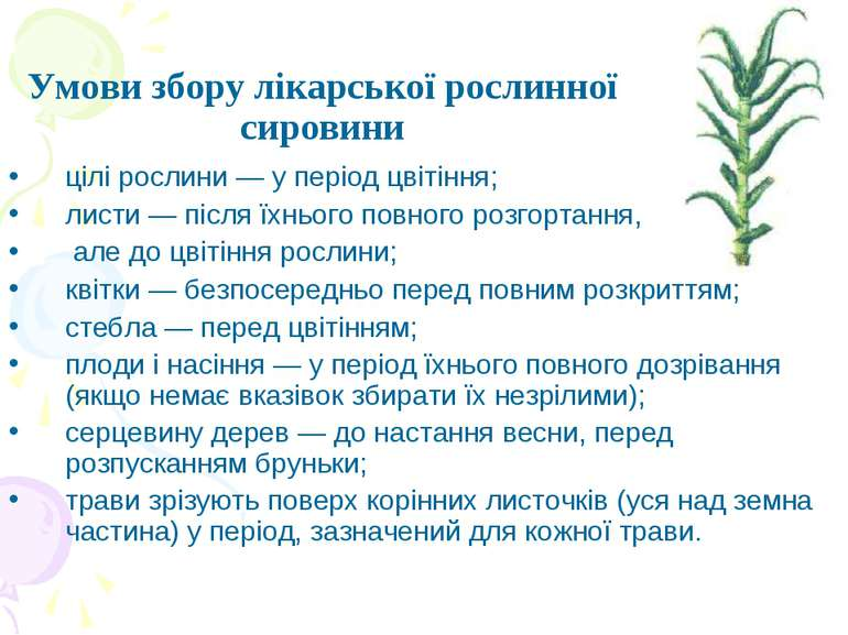 Умови збору лікарської рослинної сировини цілі рослини — у період цвітіння; л...