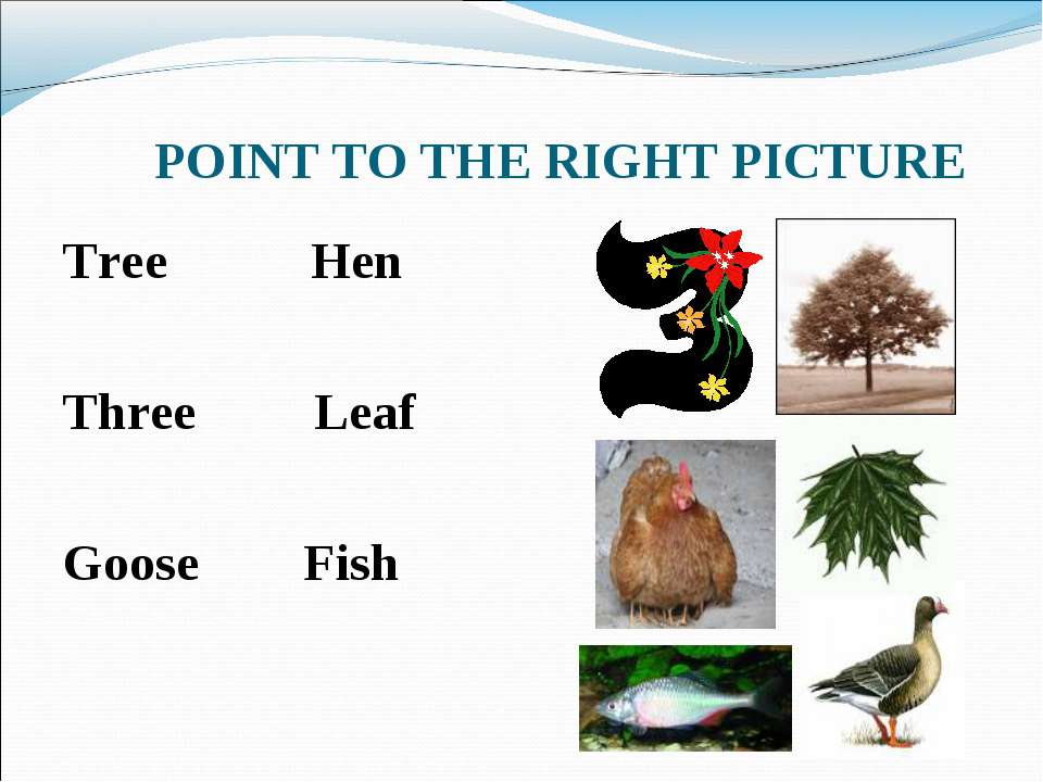 POINT TO THE RIGHT PICTURE Tree Hen Three Leaf Goose Fish