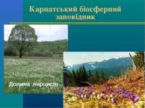Карпатський біосферний заповідник Долина нарцисів