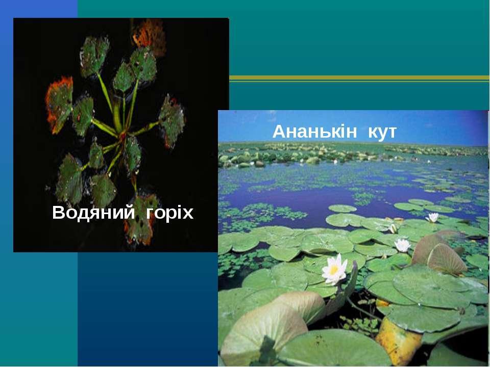 Водяний горіх Ананькін кут