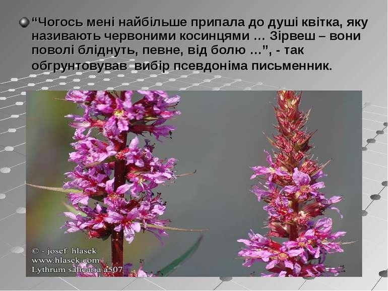 """""""Чогось мені найбільше припала до душі квітка, яку називають червоними косинц..."""