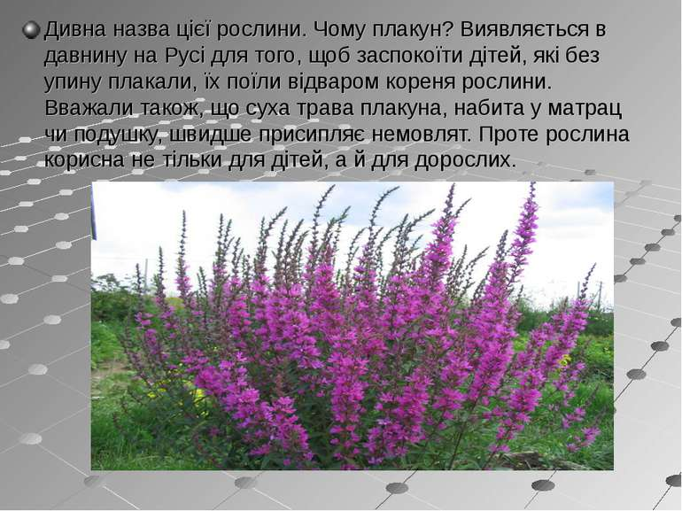 Дивна назва цієї рослини. Чому плакун? Виявляється в давнину на Русі для того...