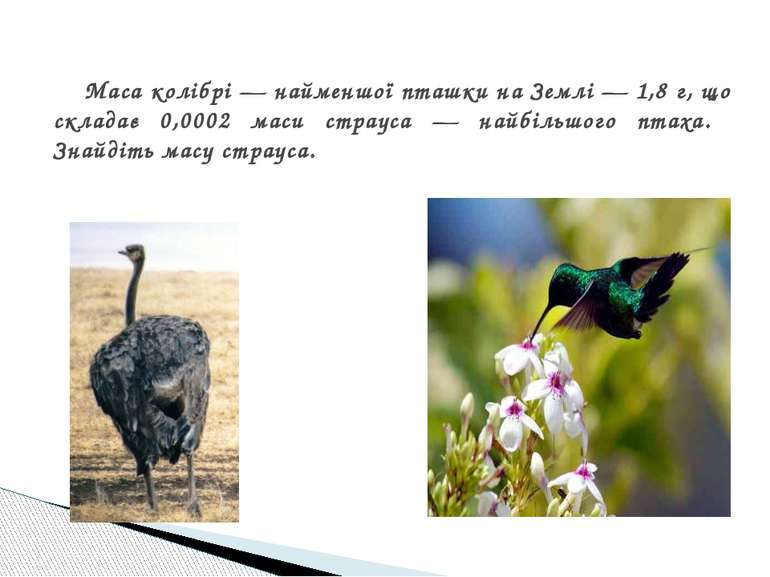 Маса колібрі — найменшої пташки на Землі — 1,8 г, що складає 0,0002 маси стра...