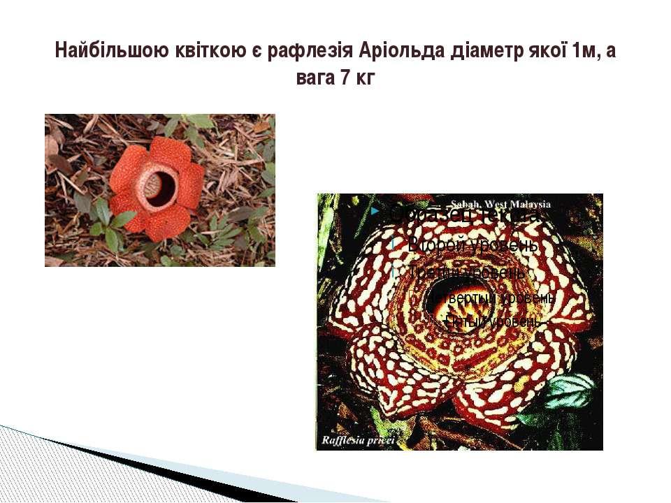 Найбільшою квіткою є рафлезія Аріольда діаметр якої 1м, а вага 7 кг