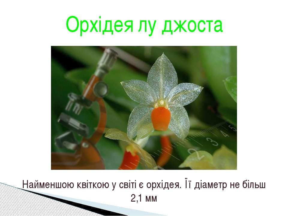 Орхідея лу джоста Найменшою квіткою у світі є орхідея. Її діаметр не більш 2,...