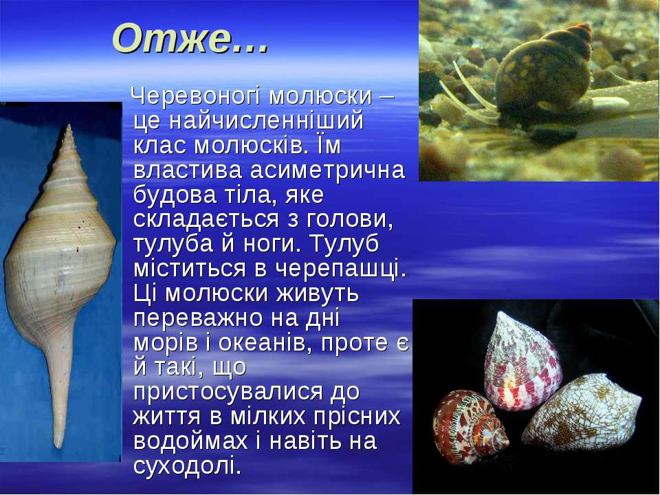 Отже… Черевоногі молюски – це найчисленніший клас молюсків. Їм властива асиме...