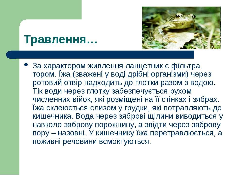 Травлення… За характером живлення ланцетник є фільтра тором. Їжа (зважені у в...