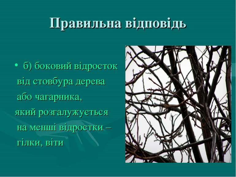 Правильна відповідь б) боковий відросток від стовбура дерева або чагарника, я...