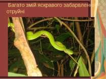 Багато змій яскравого забарвлення - отруйні