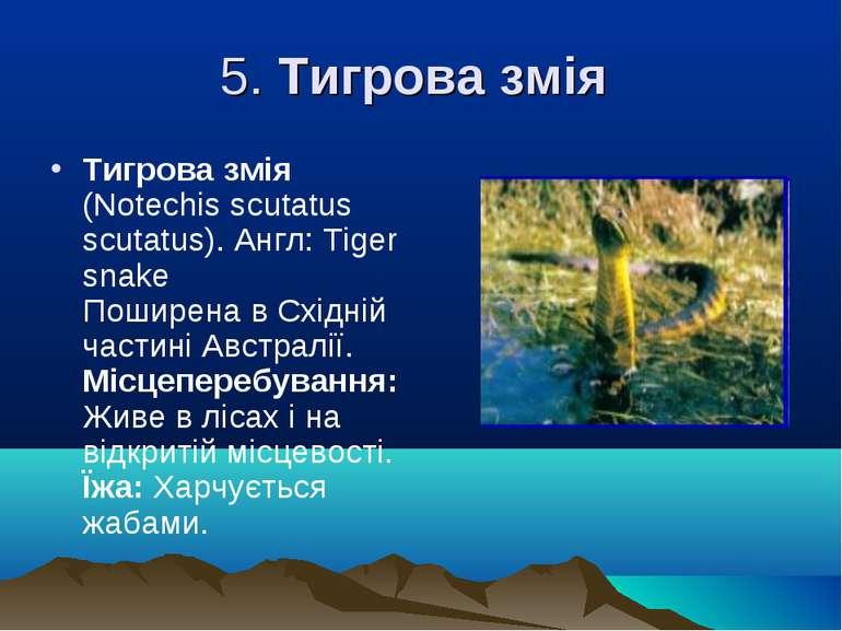 5. Тигрова змія Тигрова змія (Notechіs scutatus scutatus). Англ: Tіger snake ...