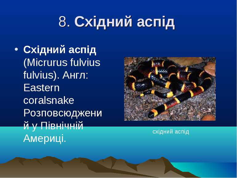 8. Східний аспід Східний аспід (Mіcrurus fulvіus fulvіus). Англ: Eastern cora...