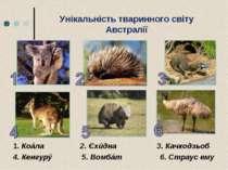 Унікальність тваринного світу Австралії 1. Коáла 2. Єхúдна 3. Качкодзьоб 4. К...