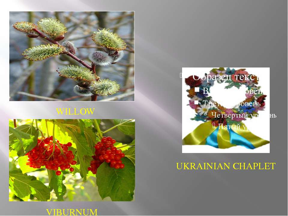 UKRAINIAN CHAPLET WILLOW VIBURNUM