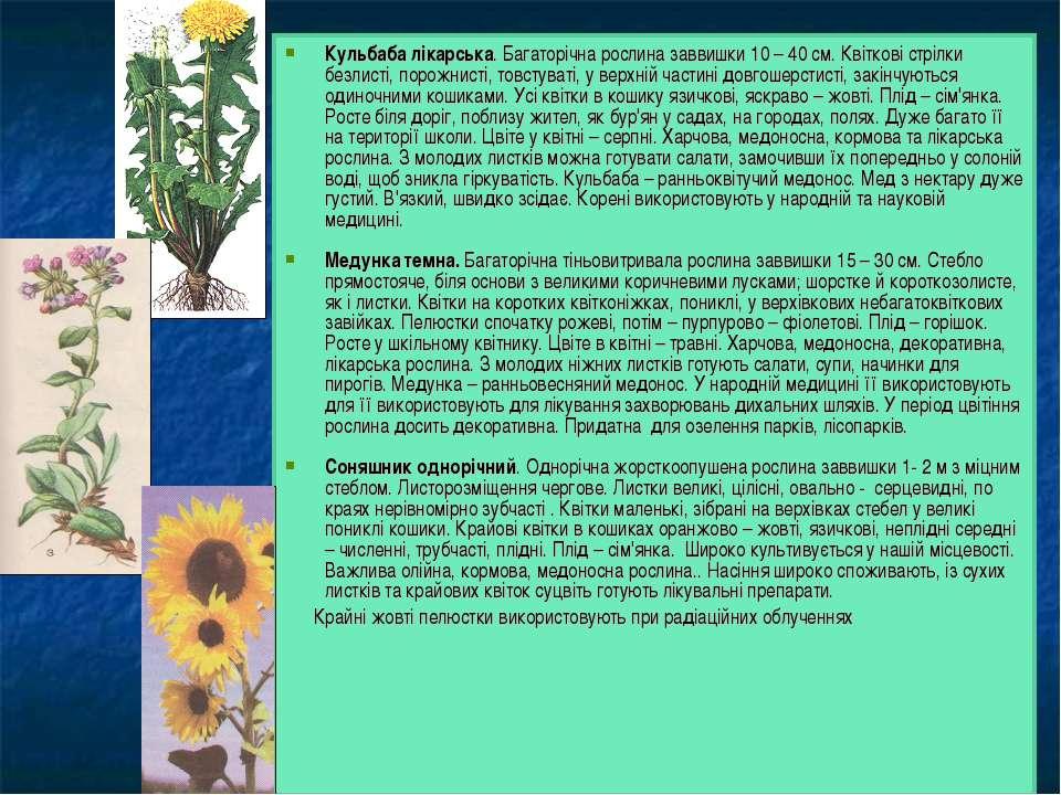 Кульбаба лікарська. Багаторічна рослина заввишки 10 – 40 см. Квіткові стрілки...