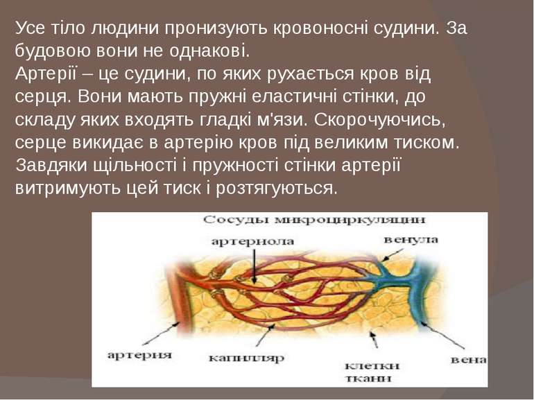 Усе тіло людини пронизують кровоносні судини. За будовою вони не однакові. Ар...