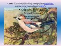 """Сойка (Garrulus glandarius), птах родини воронових, відіграє роль """"поліцейськ..."""
