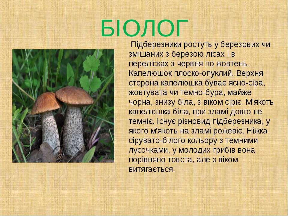 БІОЛОГ Підберезники ростуть у березових чи змішаних з березою лісах і в перел...